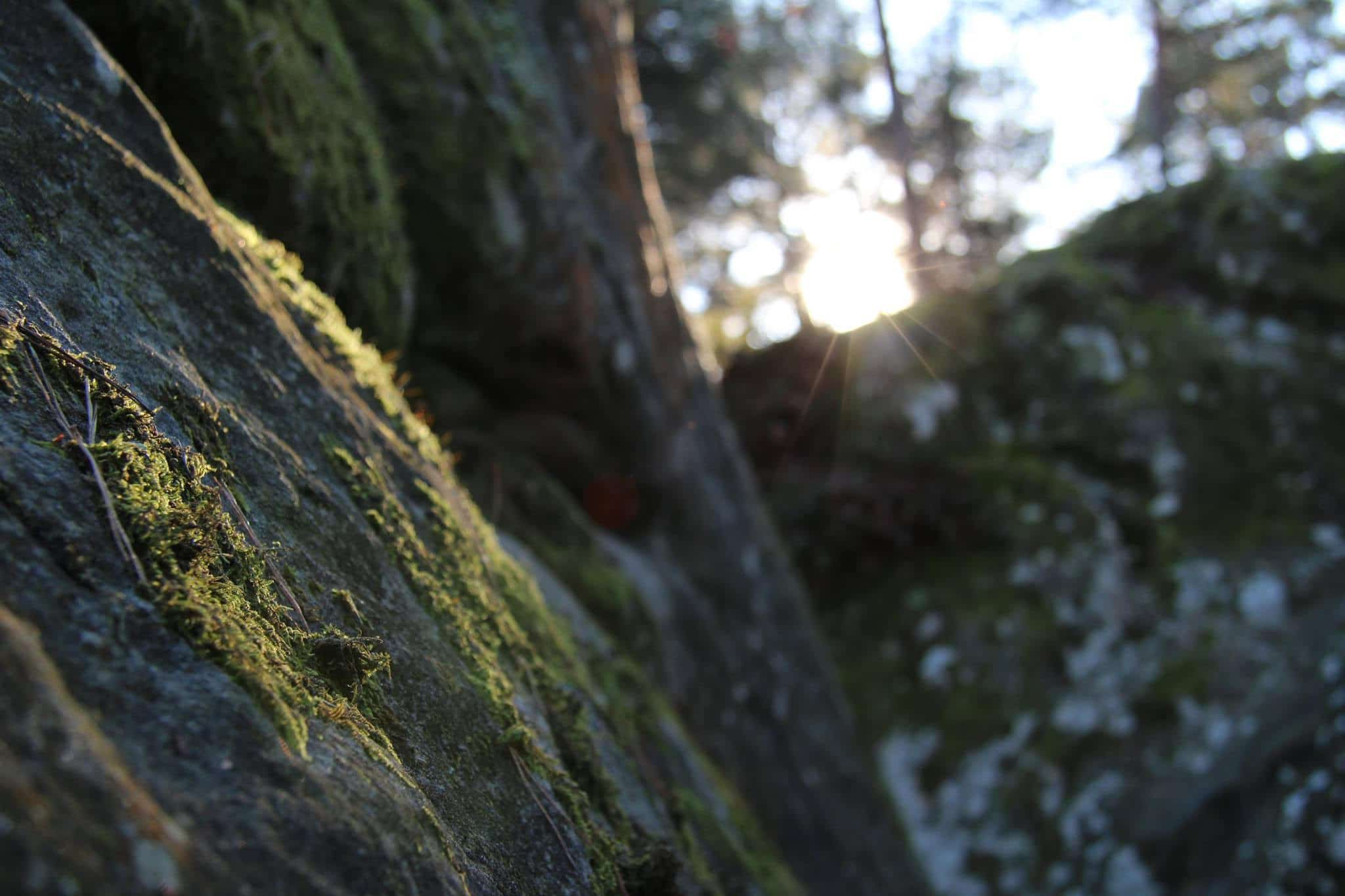 Simon Lorenzi fait sensation à Fontainebleau en signant le deuxième 9A bloc de l'histoire de l'escalade. Le grimpeur belge n'a pas fini de nous surprendre...